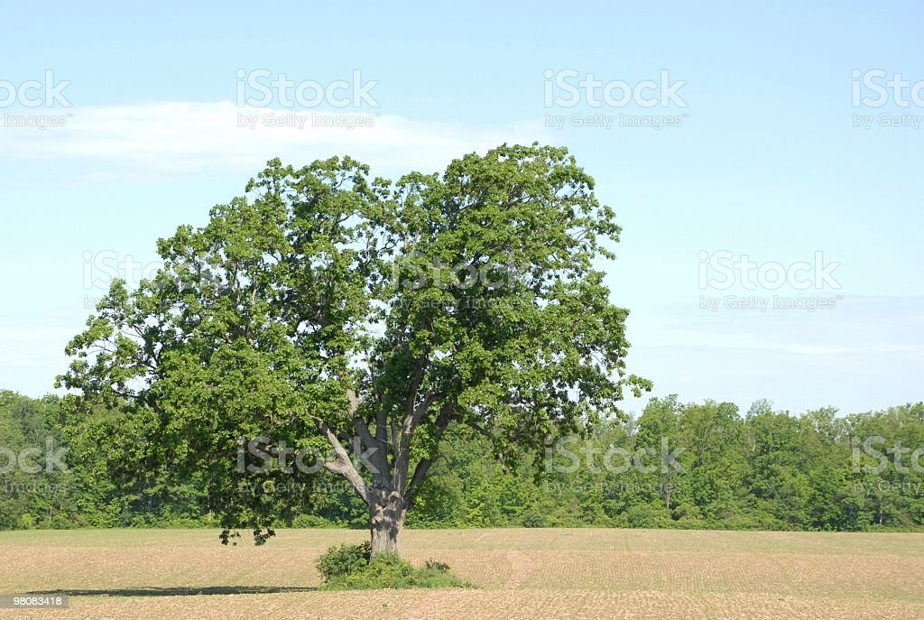 tree in the field royalty-free stock photo