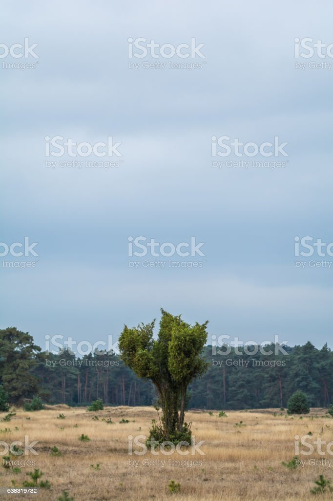 Baum in der Landschaft stock photo