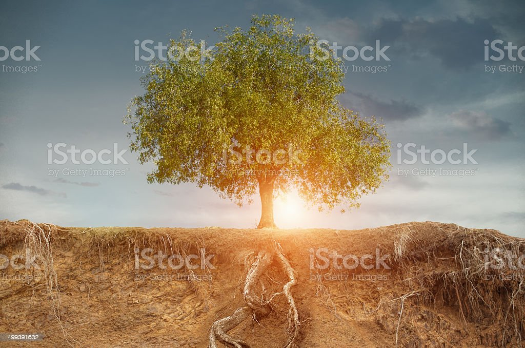 tree in the late summer with field stock photo
