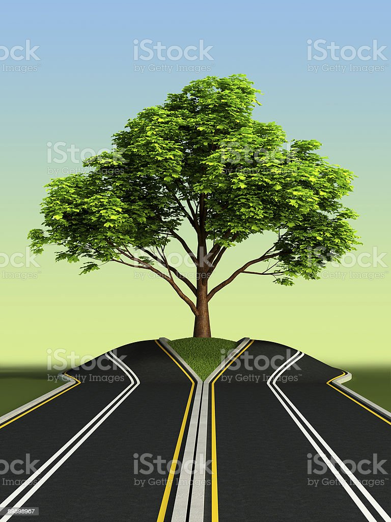 tree in the middle of road royalty-free stock photo