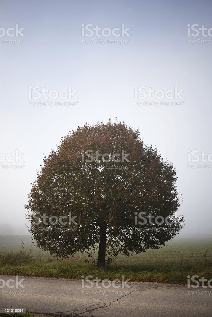 Tree In The Morning Fog royalty-free stock photo