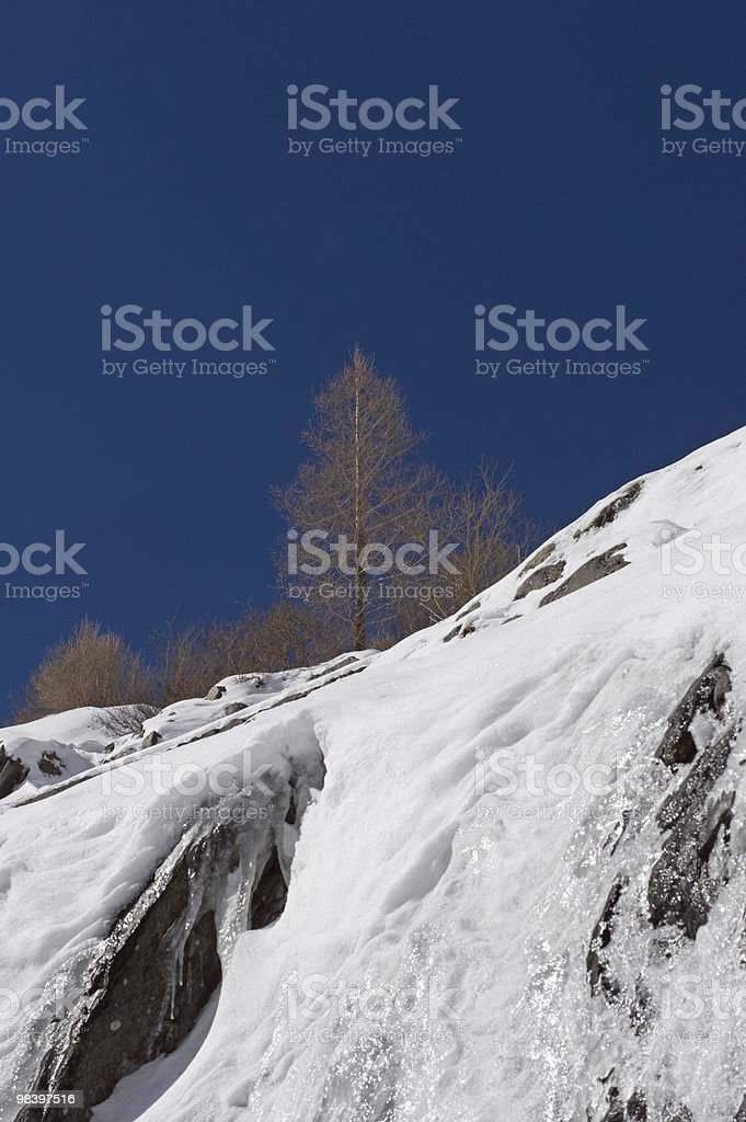 Tree in the mountains royalty-free stock photo