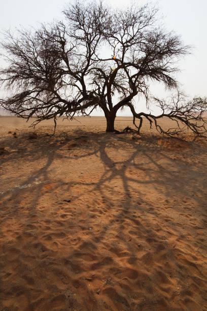 Baum in der namibischen Wüste – Foto