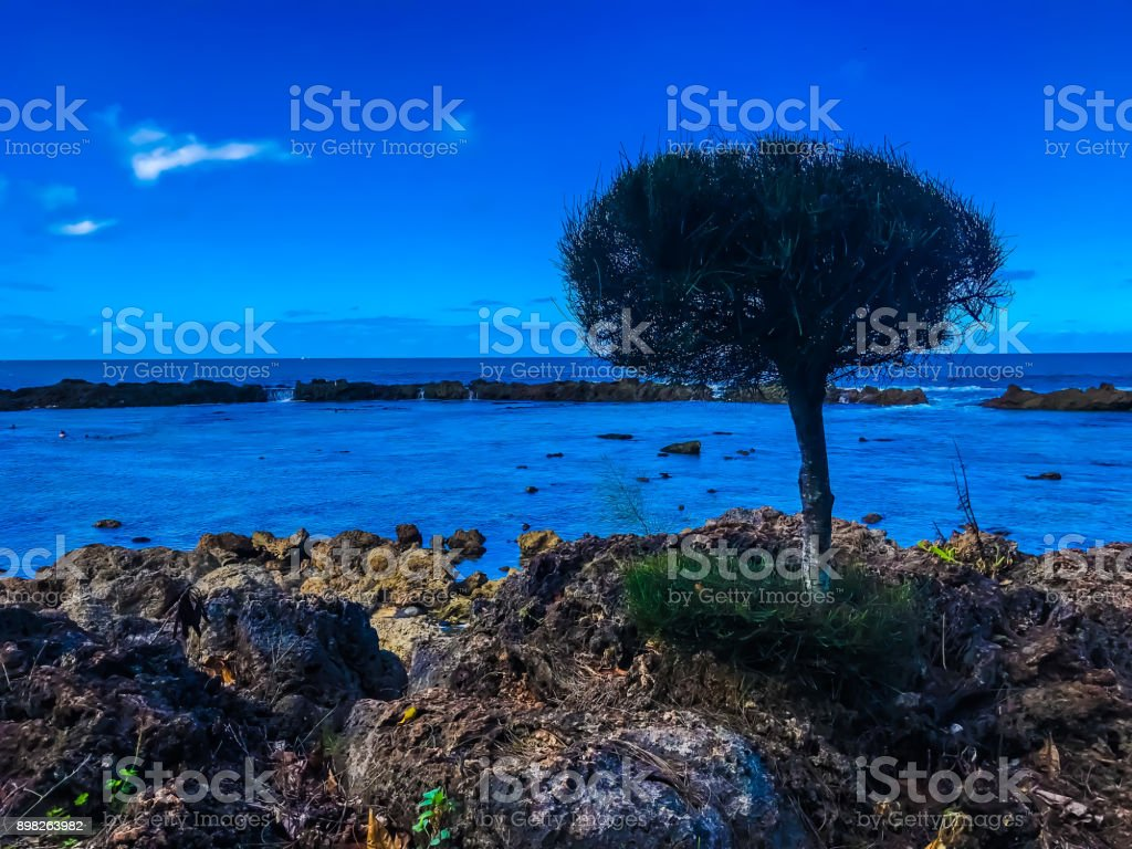 Tree In The Ocean stock photo