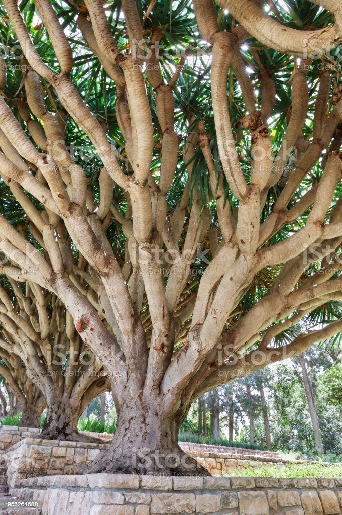 árvore no parque Rothschild - foto de acervo