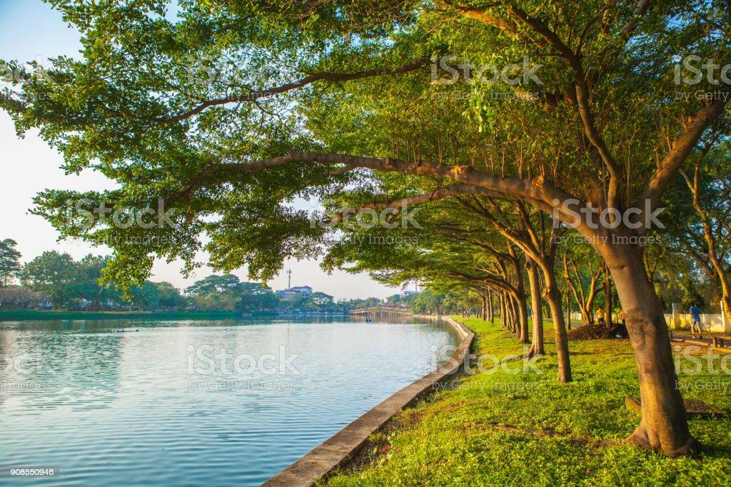 Árvore no parque com lago - foto de acervo