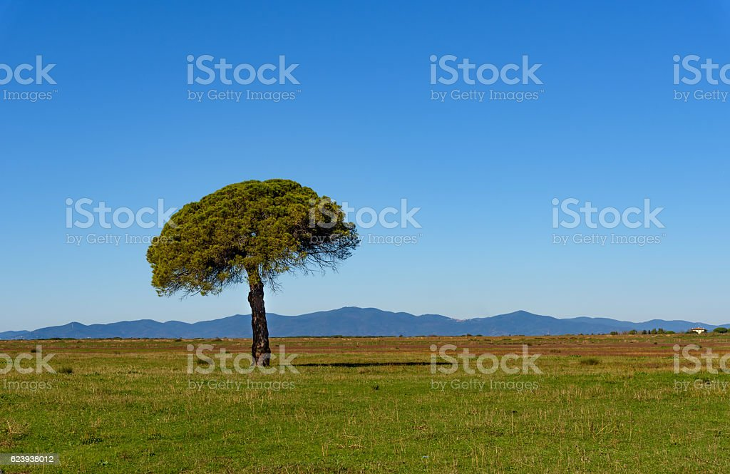 tree in the plain stock photo