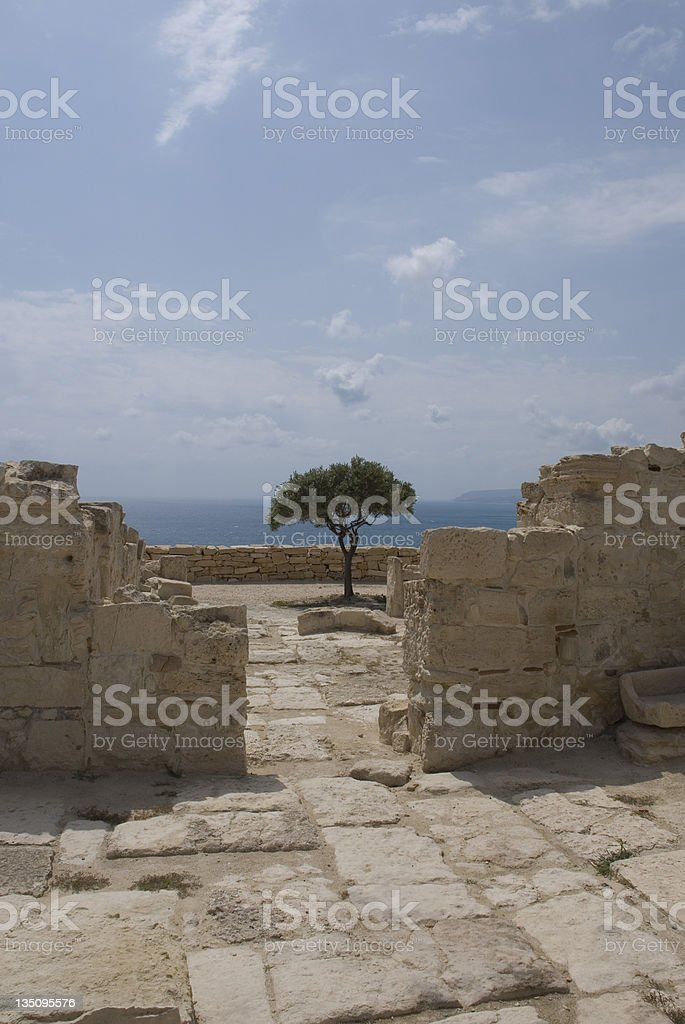 Tree in the ruins royalty-free stock photo
