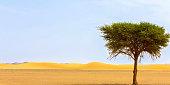 Golden sand dunes in the Algeria
