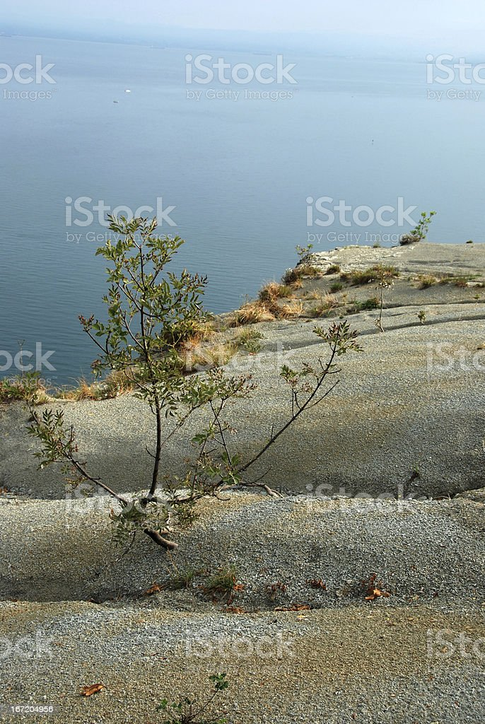 Tree in the sand royalty-free stock photo