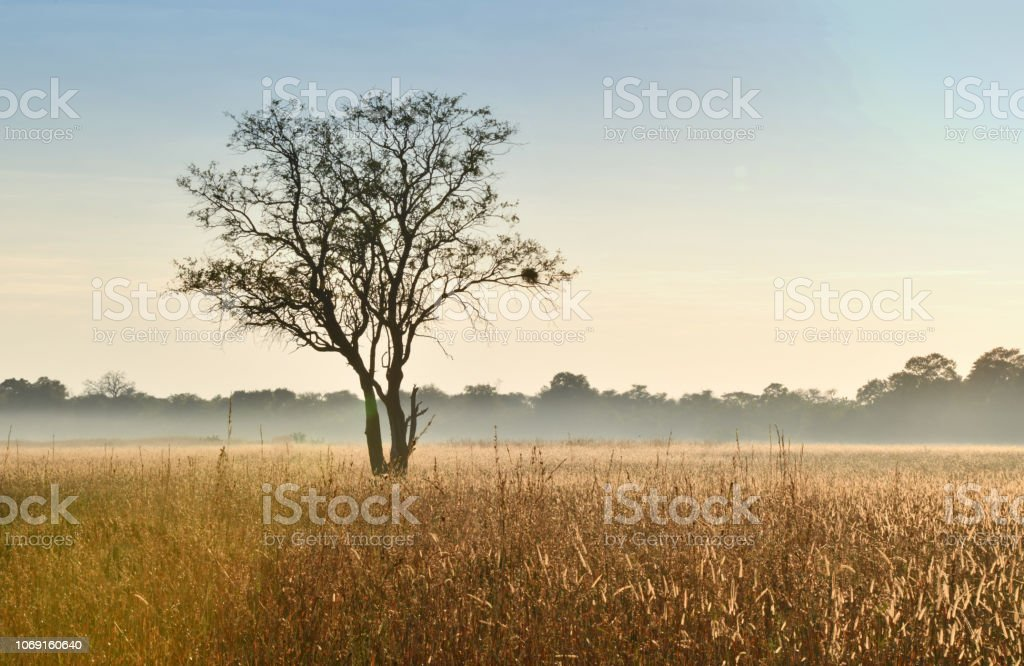 Baum in der Savanne Afrikas – Foto