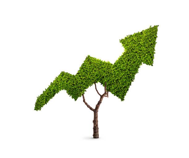 Baum in Form eines Pfeils – Foto