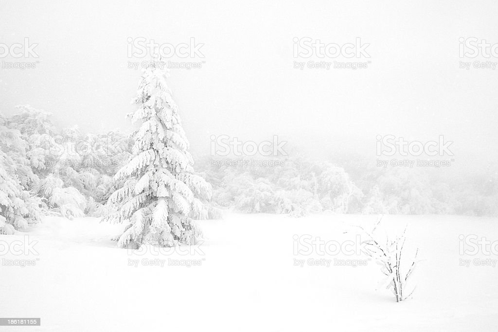 Tree in the snow stock photo