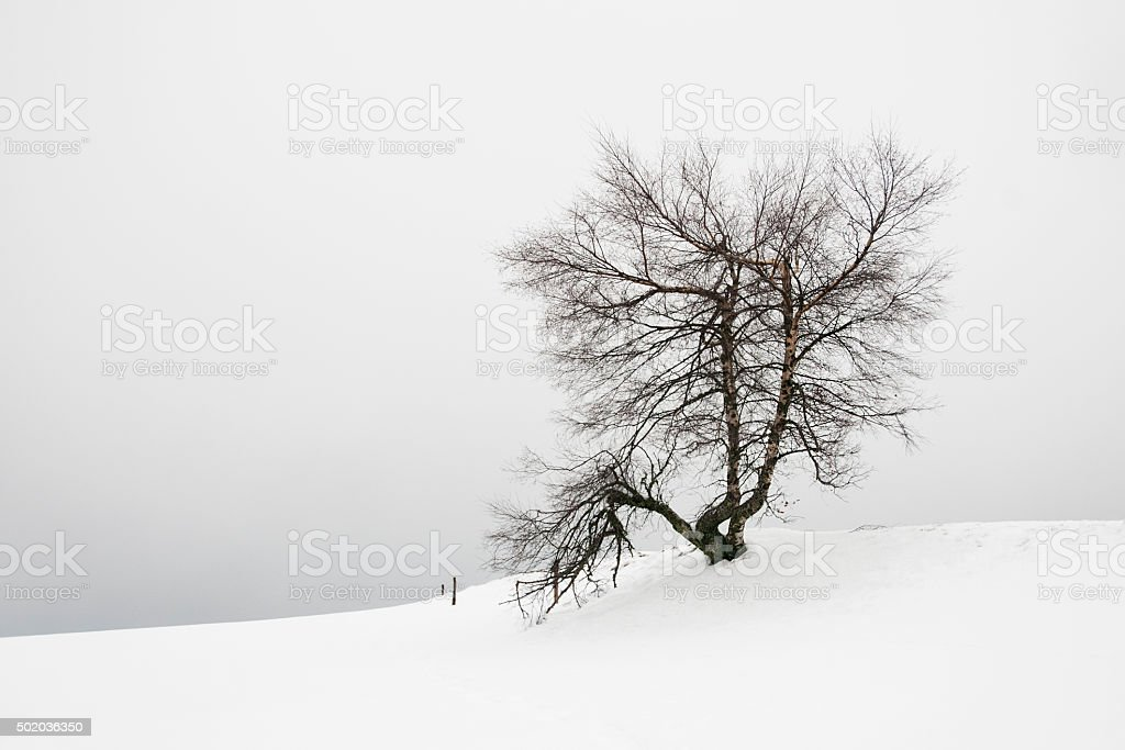Arbre dans la neige stock photo