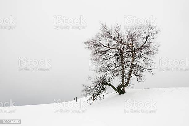 Photo of Tree in the snow