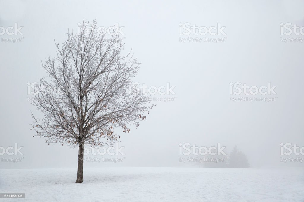 A Tree in the Snow stock photo