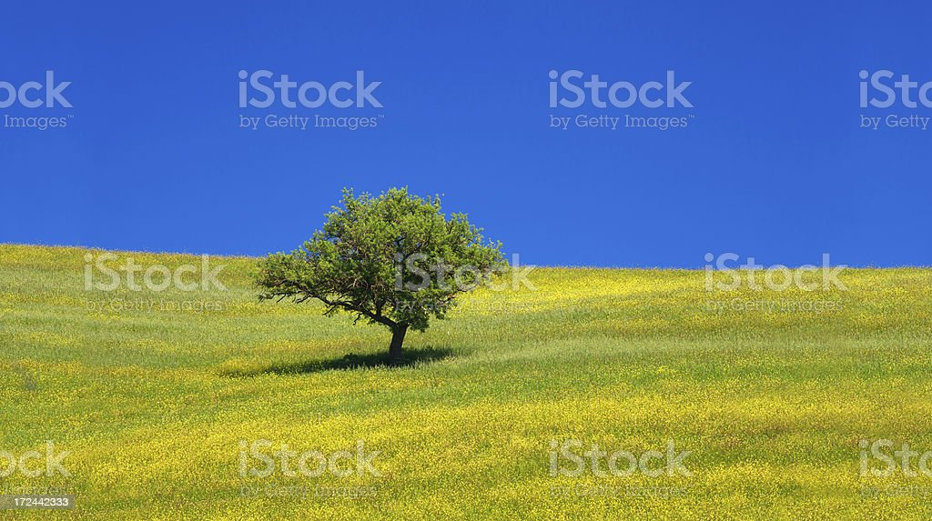 Tree in the Tuscany field with grass and sky royalty-free stock photo