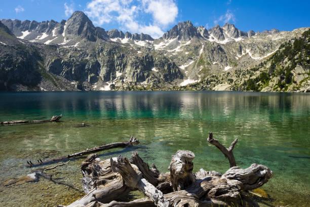 tree in the water of the black lake, aiguestortes national park - lleida стоковые фото и изображения