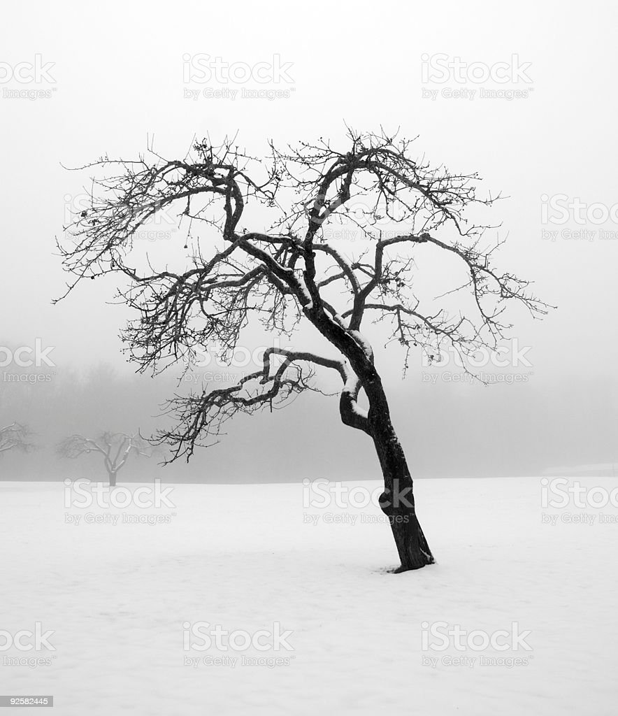 Tree in the winter royalty-free stock photo
