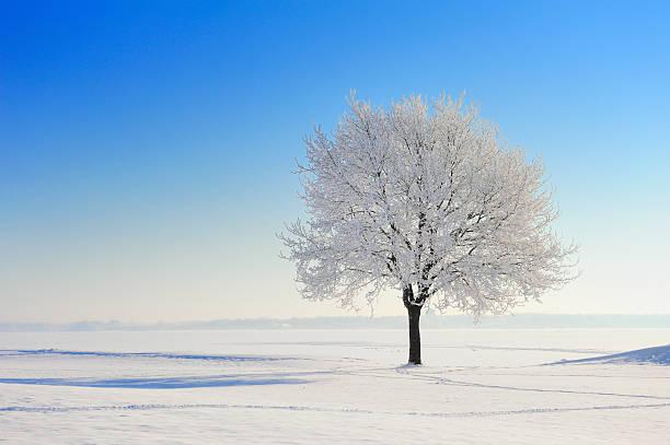 Baum im winter, Schnee bedeckt Landschaft – Foto