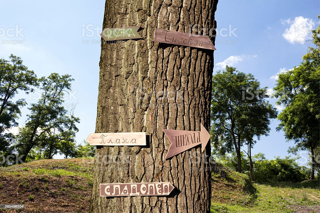 Tree in the woods with signs on it stock photo