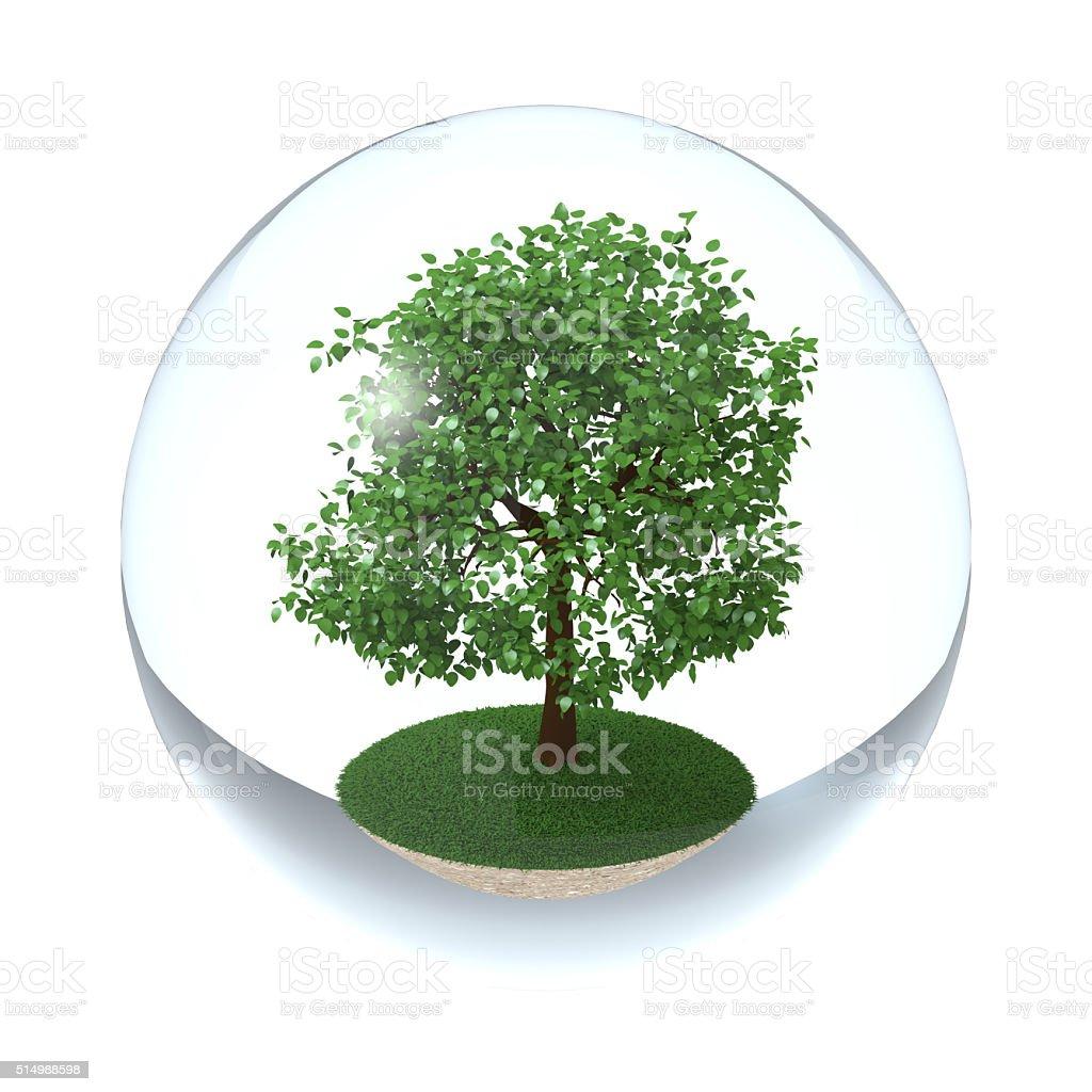 Árbol en la esfera transparente - foto de stock