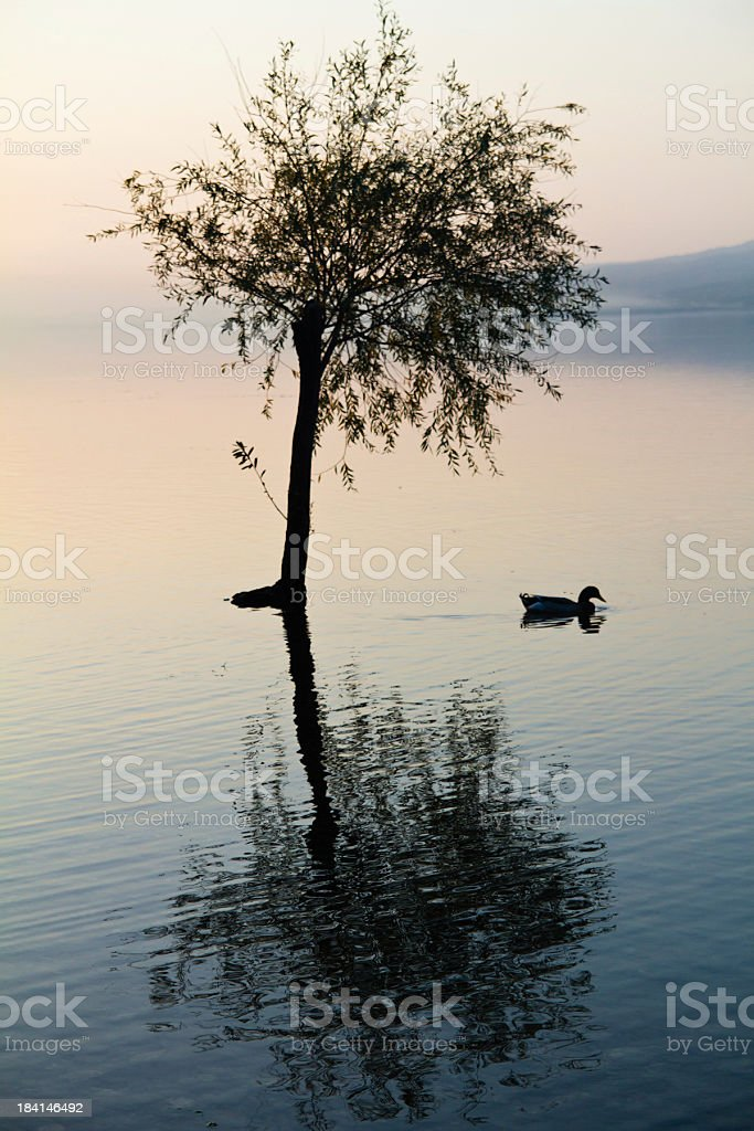 Tree in water royalty-free stock photo