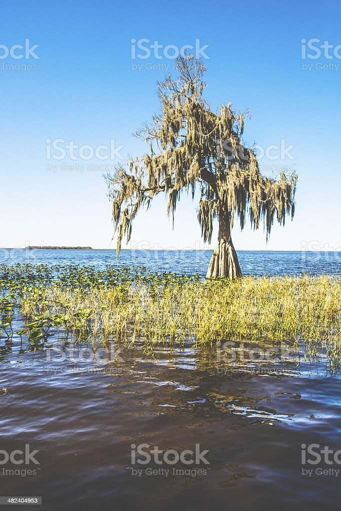 Tree in water. stock photo
