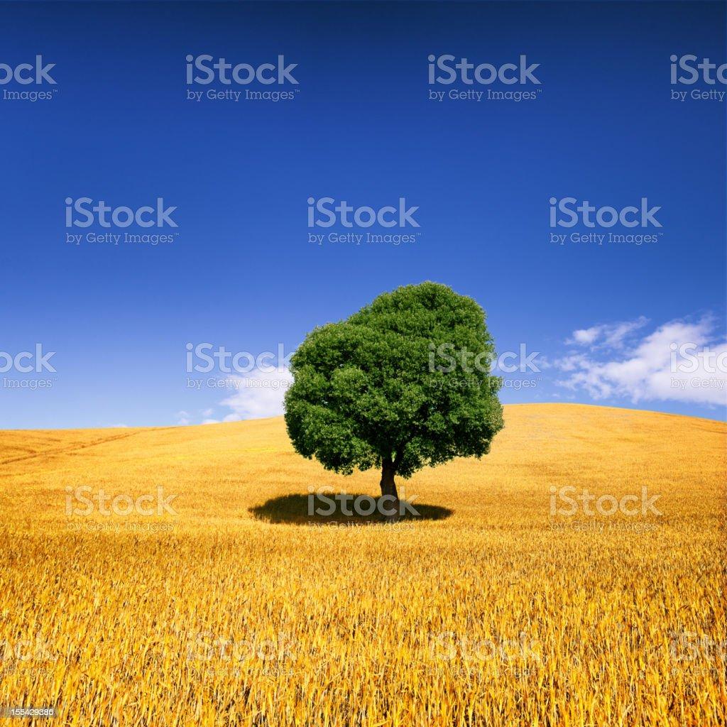 Tree in Weat Field royalty-free stock photo