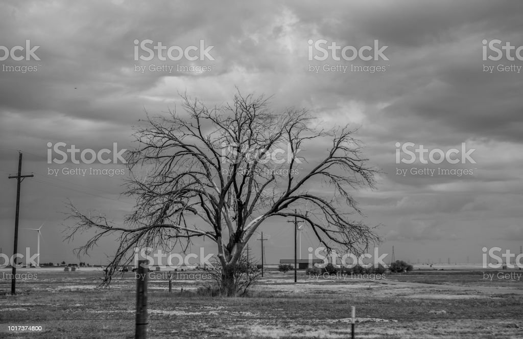 tree in west Texas monochrome with clouds stock photo