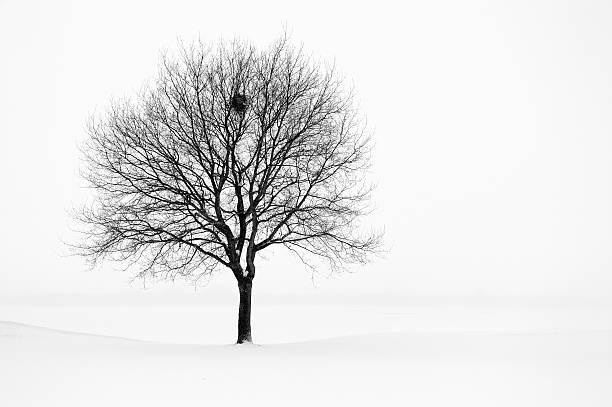Baum im winter Landschaft, schwarz und weiß – Foto