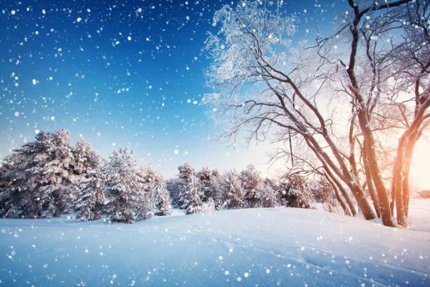 baum im winter landschaft - schneeflocke sonnenaufgang stock-fotos und bilder