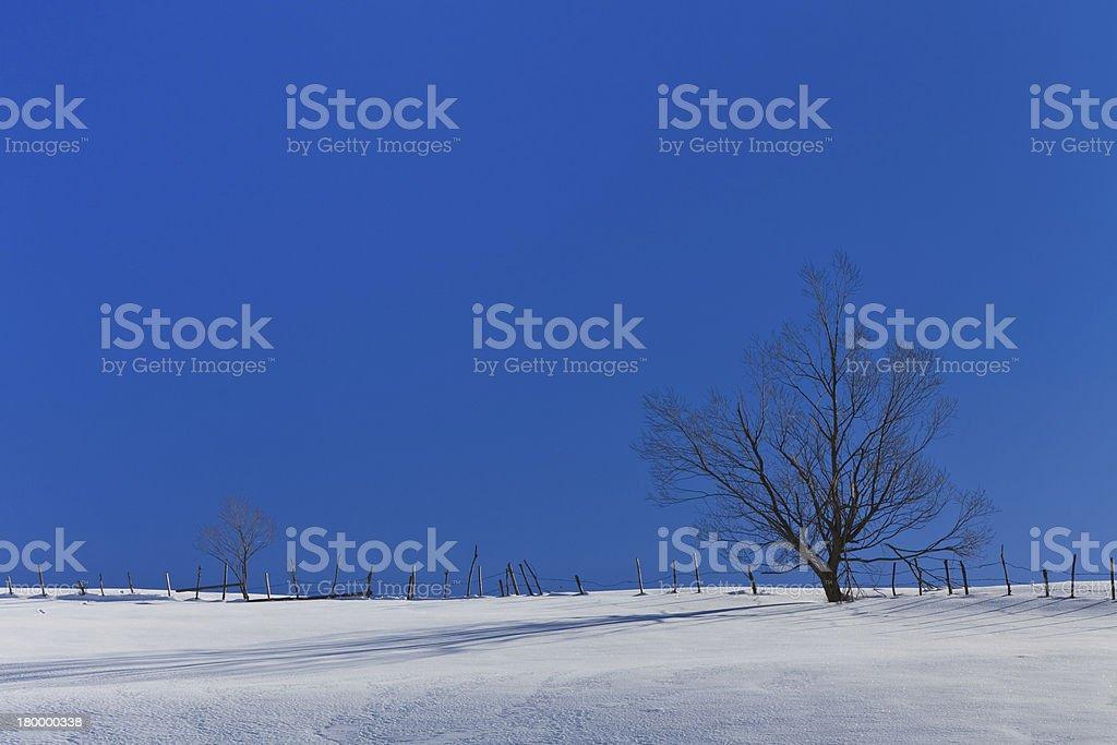 트리를 겨울 royalty-free 스톡 사진