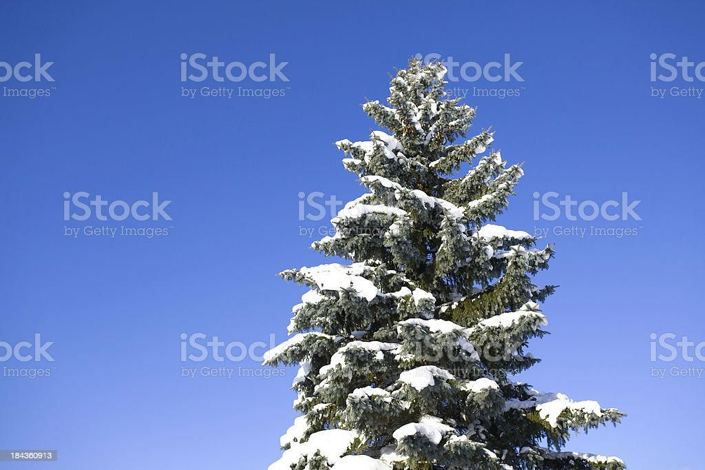 tree in winter royalty-free stock photo