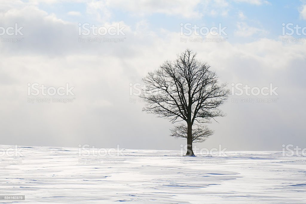 Tree in winter stock photo