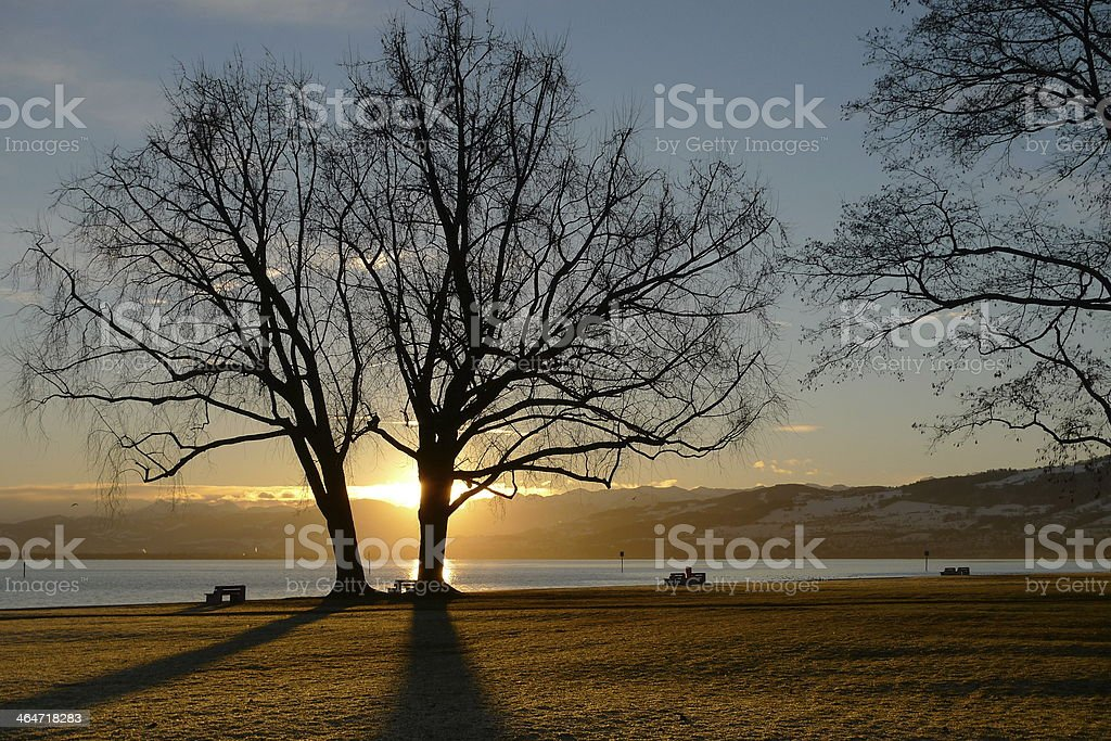 Tree in winter sunrise stock photo