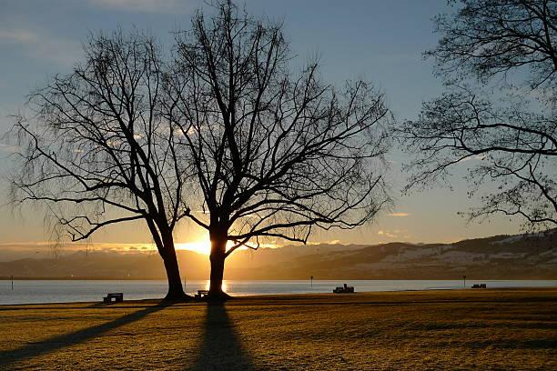 Baum im winter-Sonnenaufgang – Foto