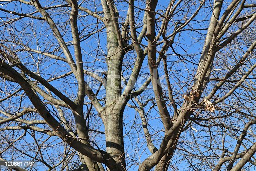 Tree in winter time against blue sky