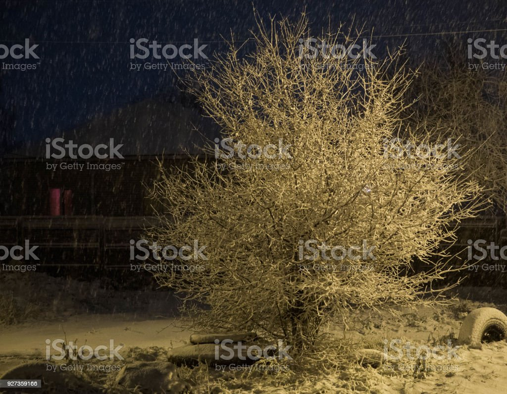 Tree in winter under the light of a street lamp Tree in winter under the light of a street lamp City Stock Photo