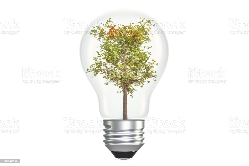 tree inside light bulb ecological concept 3d rendering isolated on