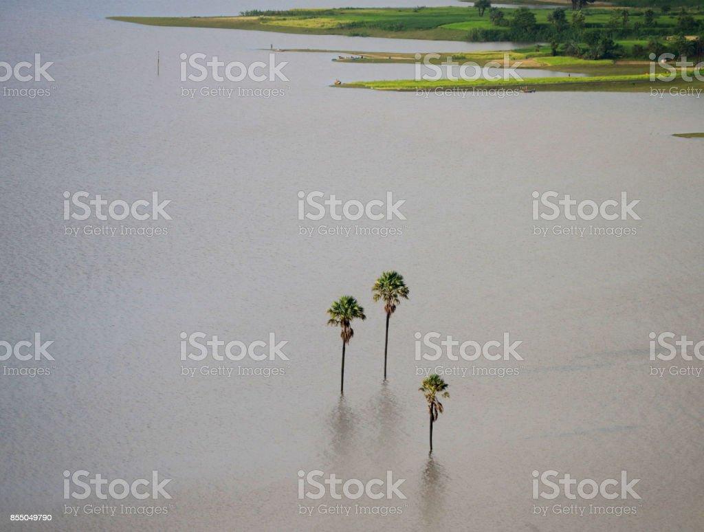Tree inside water stock photo