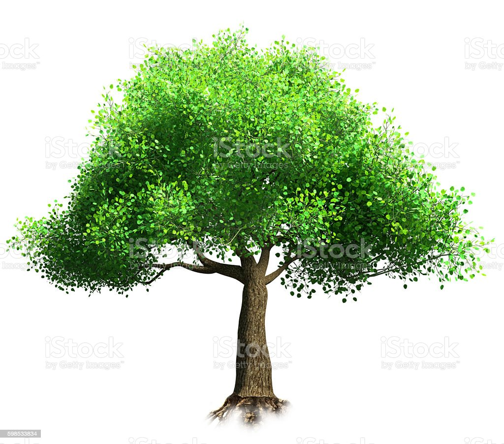 tree isolated 3D illustration photo libre de droits