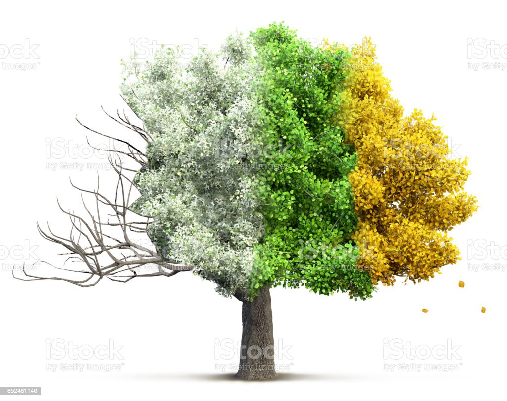 tree isolated 3D illustration stock photo