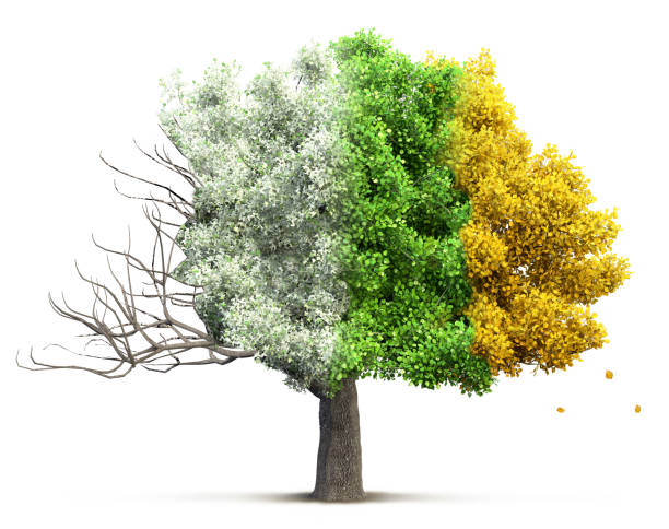 tree isolated 3D illustration Four seasons tree isolated, 3D illustration four seasons stock pictures, royalty-free photos & images