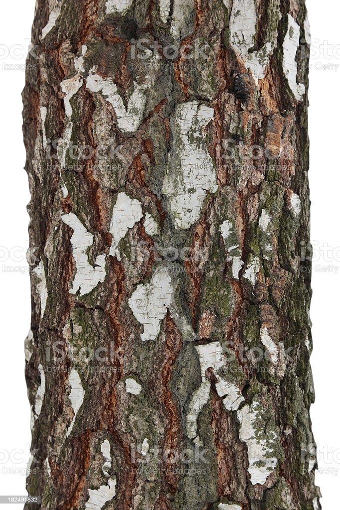 Tree Isolated royalty-free stock photo