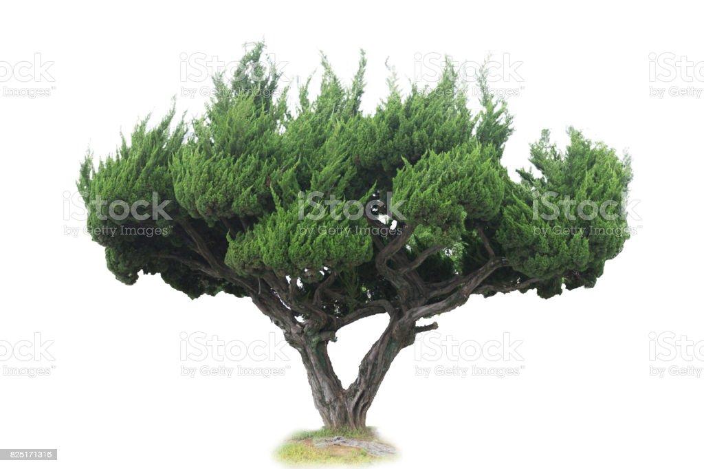 Baum Isoliert  – Foto