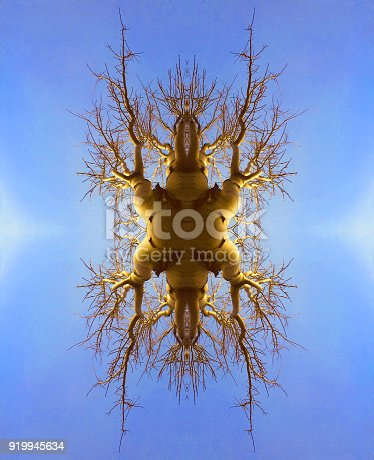 istock Tree kaleidoscope abstract background 919945634