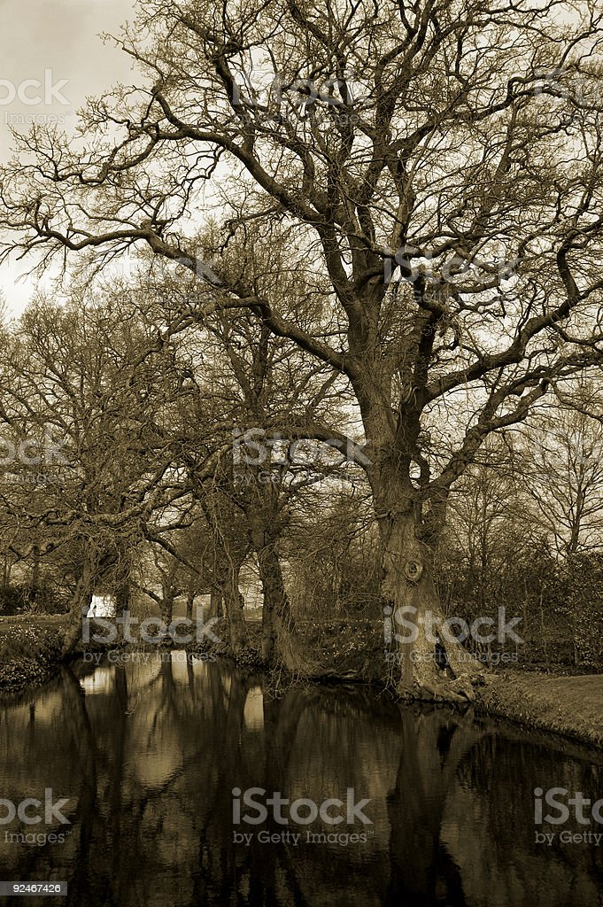 Tree Lake royalty-free stock photo