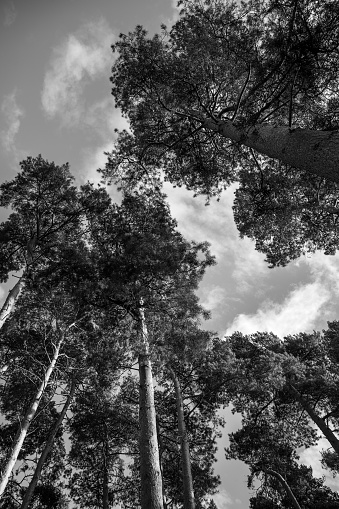 Wide angle view of  trees with blue sk