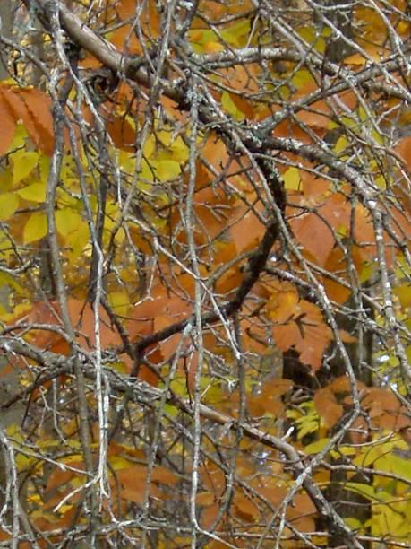 Tree Leaf Weaving stock photo